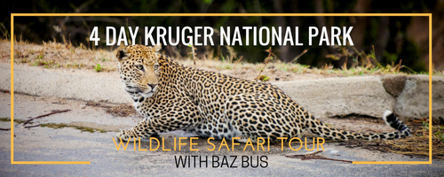 4-day-kruger-national-park-wildlife-safari-tour