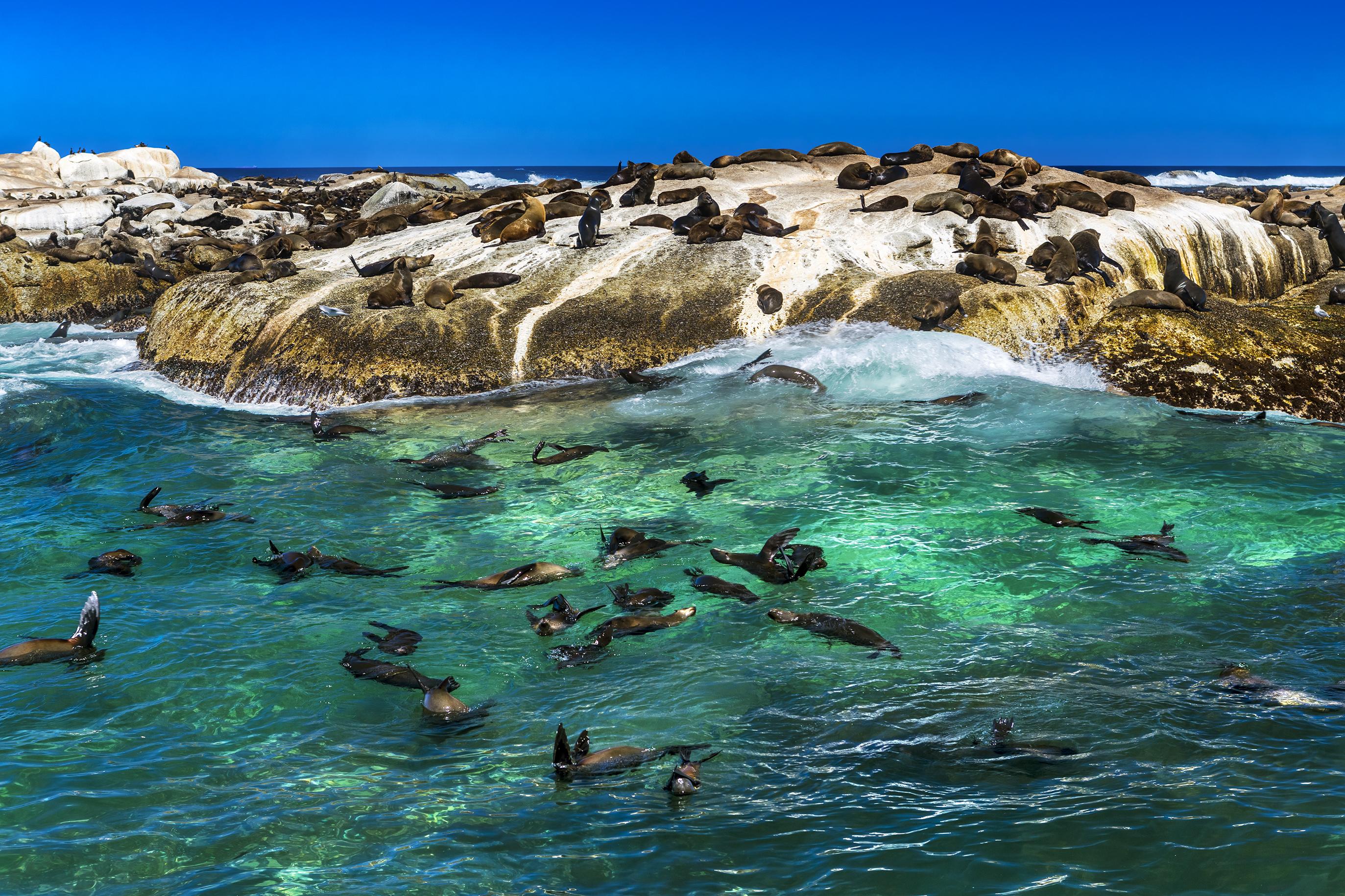 Fur seals on Duiker Island
