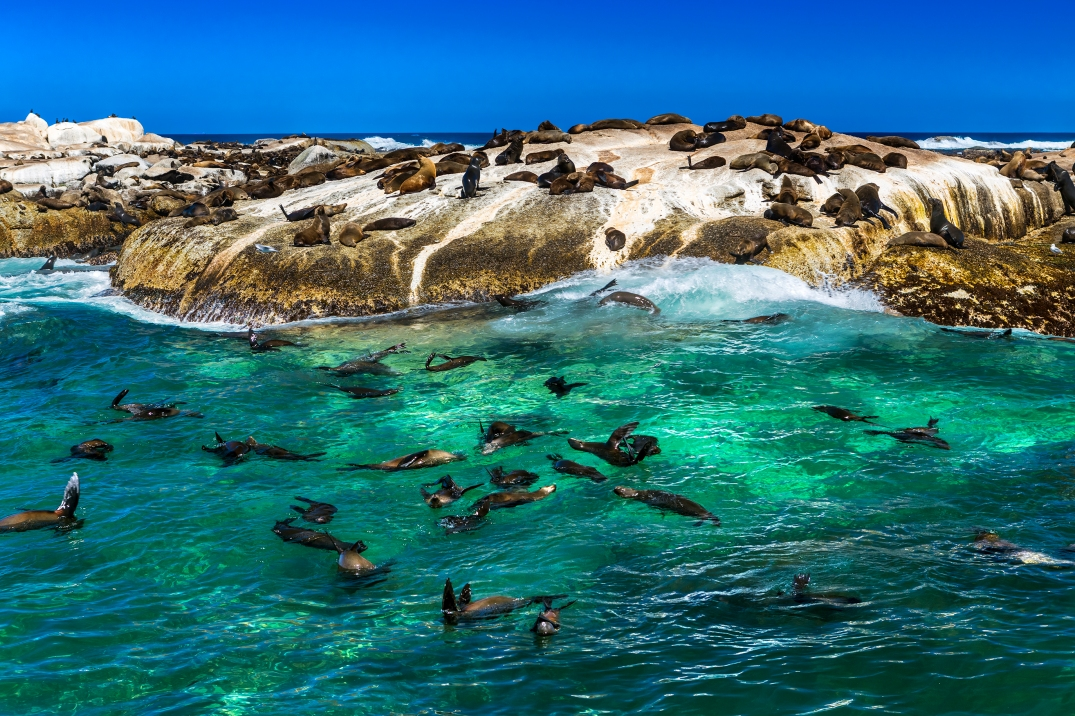 Fur seals on Duiker Island